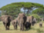 akagera parc au rwanda