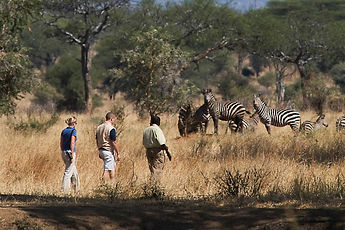 safari marche.jpg