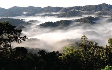 nyungwe-forest.jpg