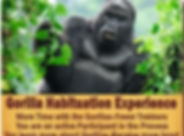gorilla-habituation-advantage-400_edited