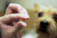 size of chip photo.png