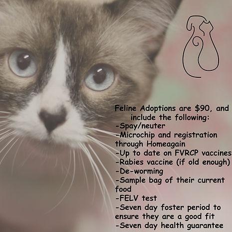 Cat Adoptions.jpg