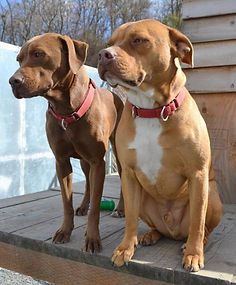 Two animals from our shelter