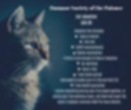cat adoption.png