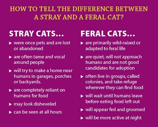 Stray vs feral cats.