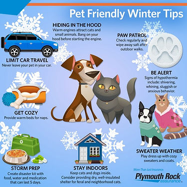 FB_ENT_Pet_Winter_Tips_Blog.jpg