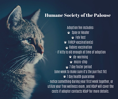 Adoption fee includes_ Spay or Neuter Fe