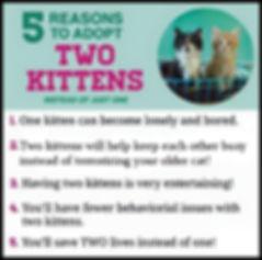2-kittens.jpg