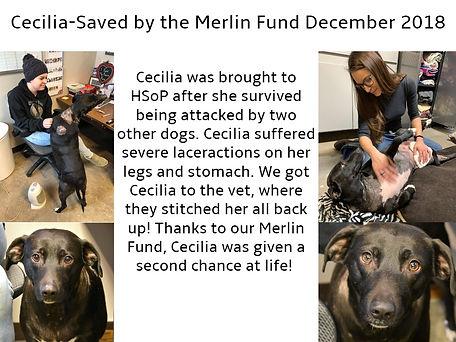 Cecilia Merlin Fund.jpg