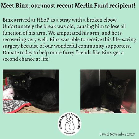 Binx Merlin.jpg