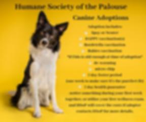 dog adoption graphic.png