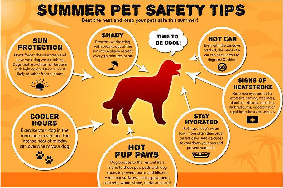 Summper+Pet+Safety+Tips+1200.jpg