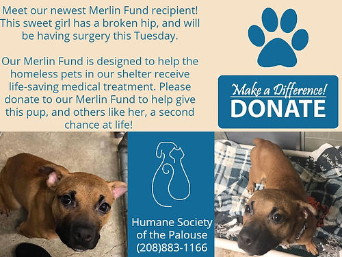 Merlin Fund Puppy (1).jpg