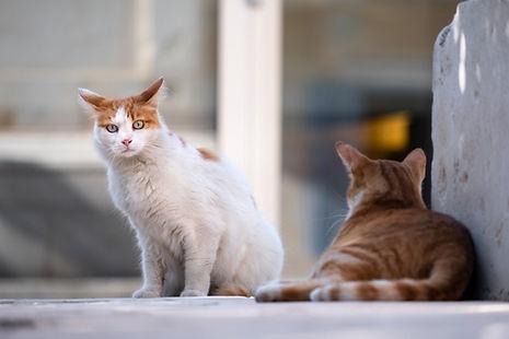 cats-5606202_1920.jpg