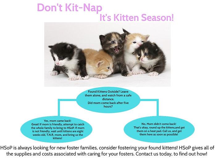 found kittens.jpg