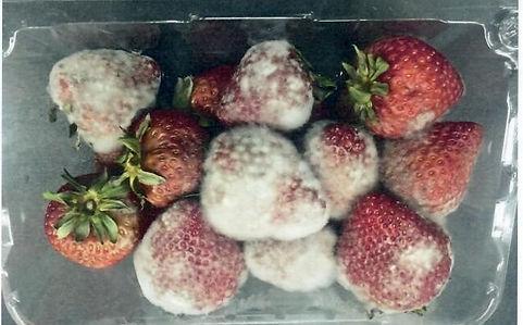 Strawberries 1 (2) words.jpg