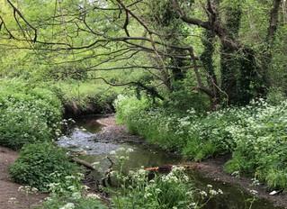 Landscape Art @ Beckenham Place Park
