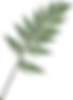 —Pngtree—adiantum_2561406.png