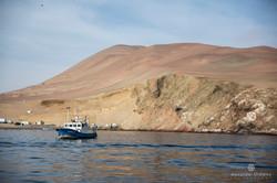 Bahia de Paracas (Perú)