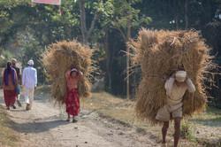 Campesinos trabajando