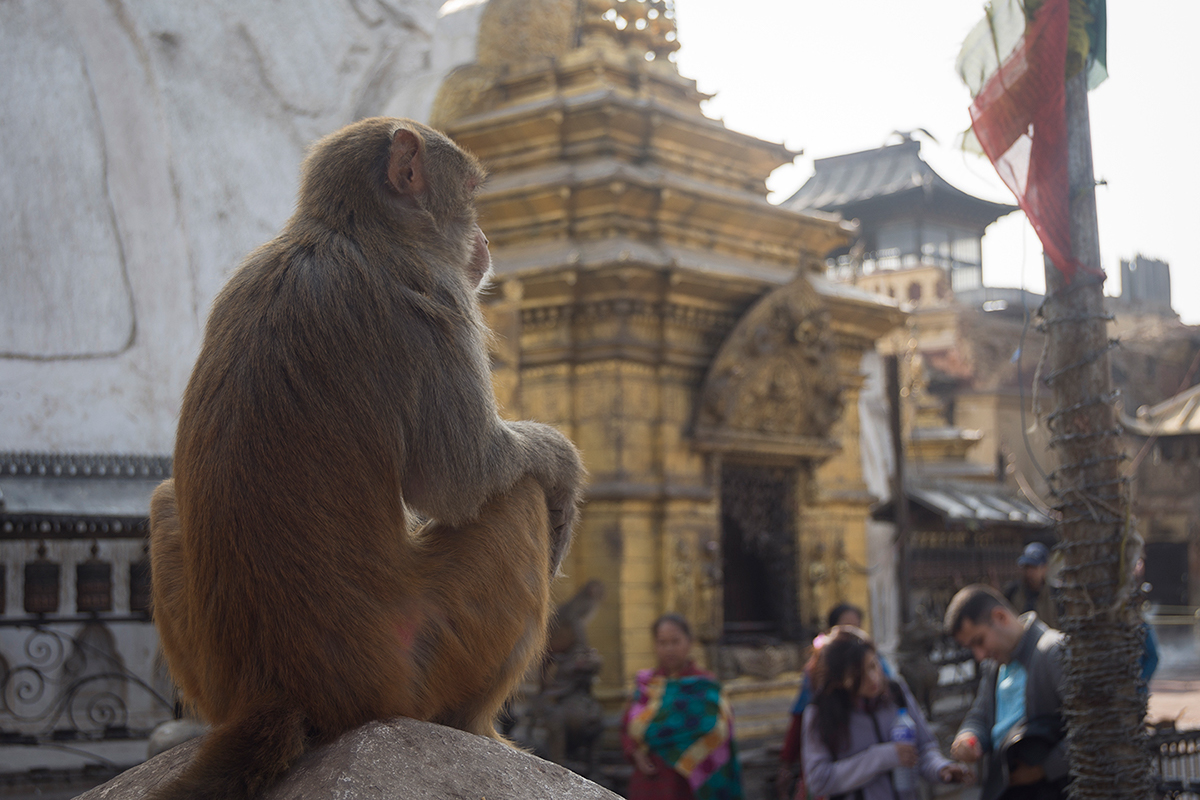 Swayambunath: the monkey temple
