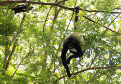 Vida salvaje en Chiapas