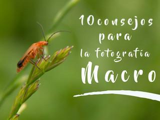 10 Consejos para la fotografía macro