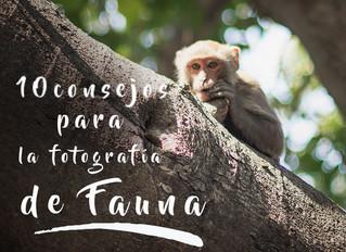10 consejos para la fotografía de Fauna