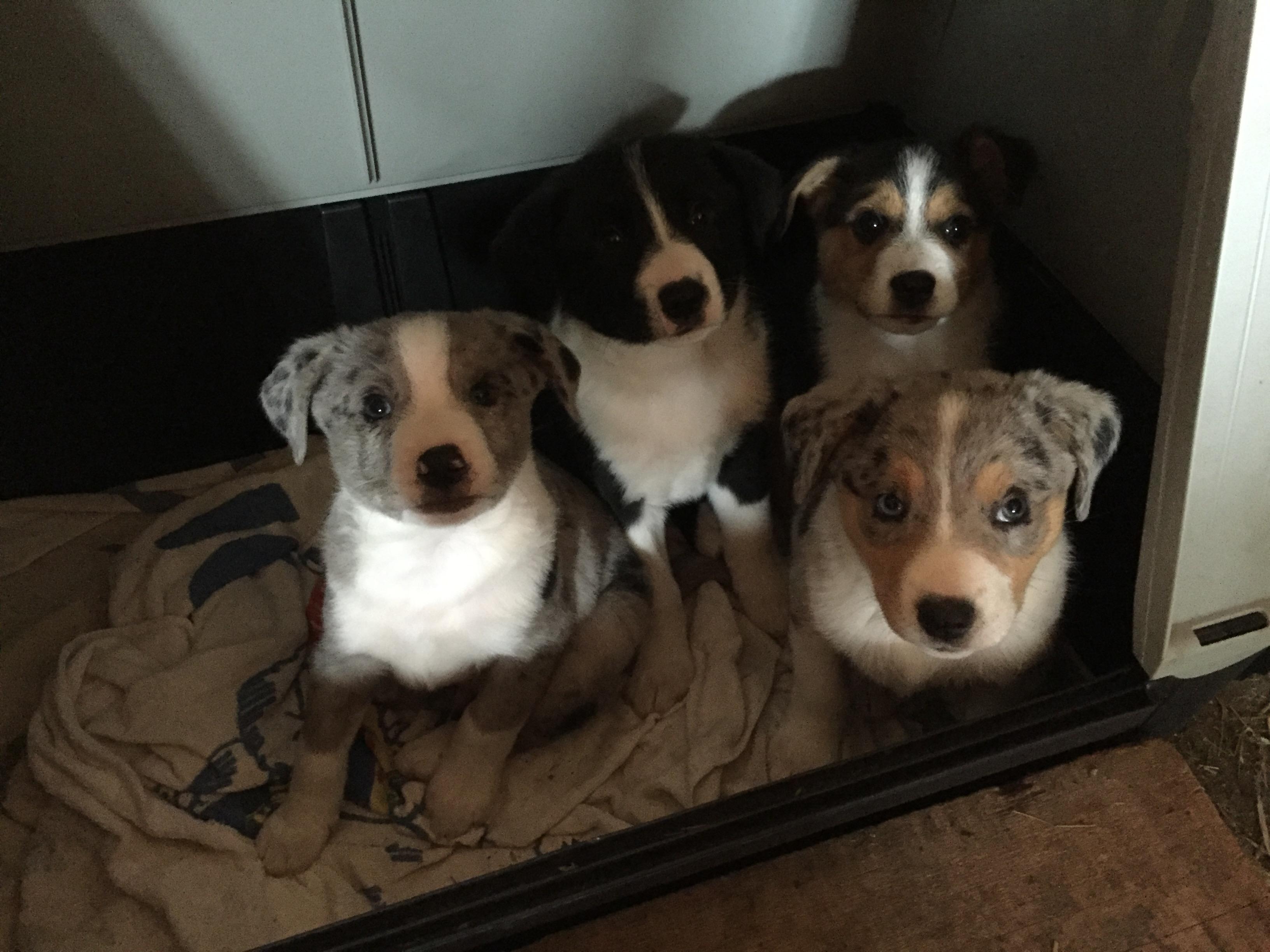 Hunde Nachwuchs