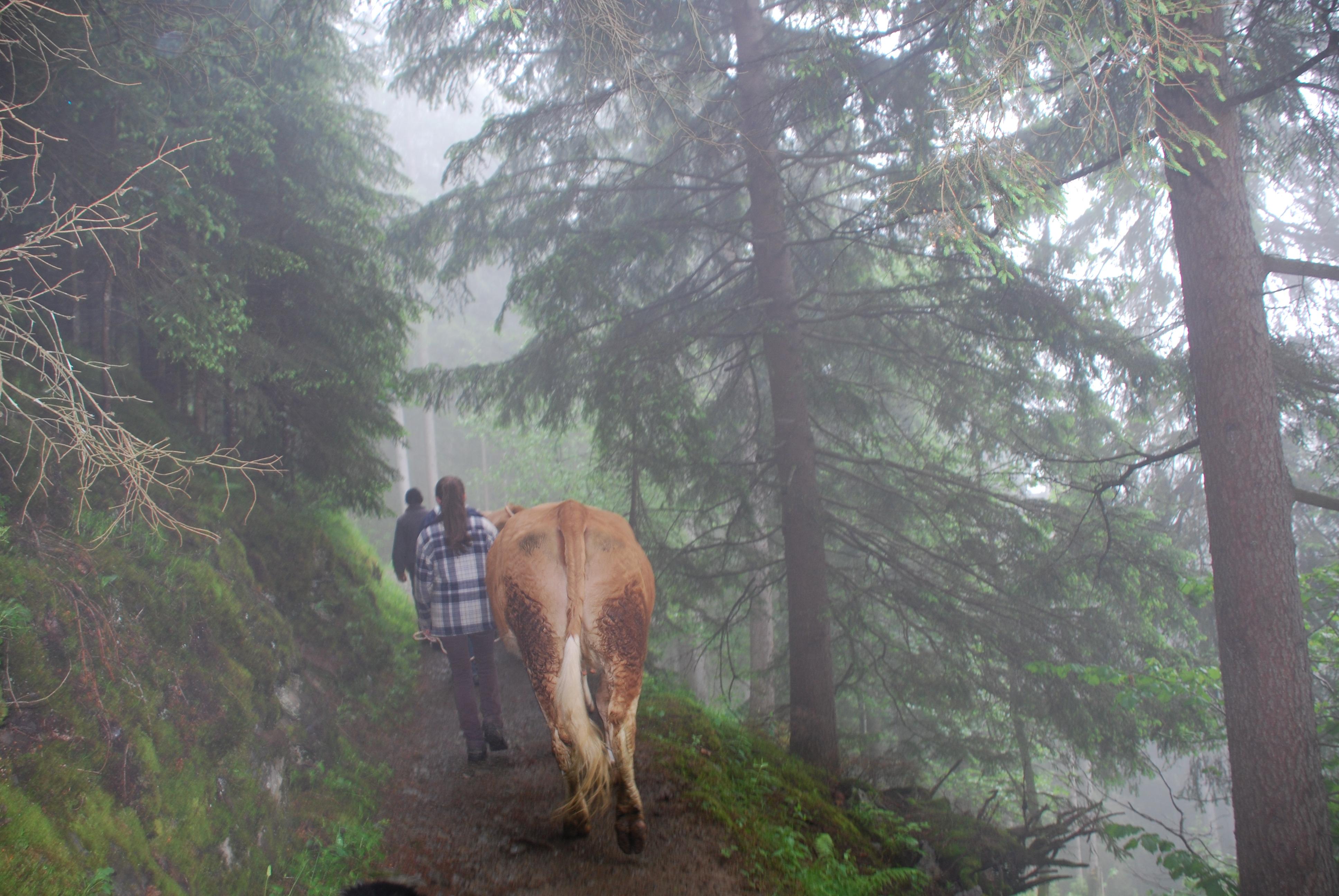 Alpauffahrt
