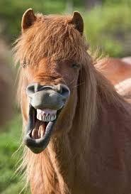 laughing horse 2.jpg