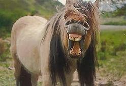 laughing horse 5.jpg