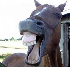 laughing horse 3.jpg