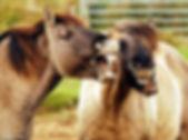 laughing horse 10.jpg