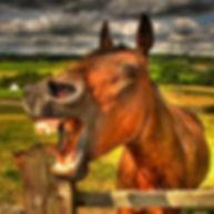 laughing horse 7.jpg