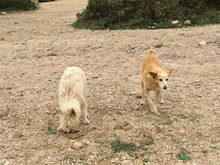 THE STORY OF BILL & BEN - OUR 2 PORTUGUESE STRAY DOGS