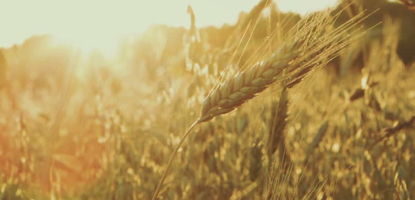 16T Grain Trailer Hire 15% Summer Discount!!
