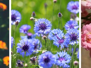 Le bien-être par les plantes à parfum, aromatiques et médicinales