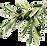 olives (1).png