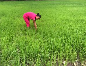 Hình NN Khmer.jpg