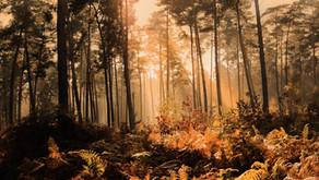 teleological trees