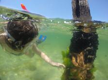 Snorkeller exploring pylon