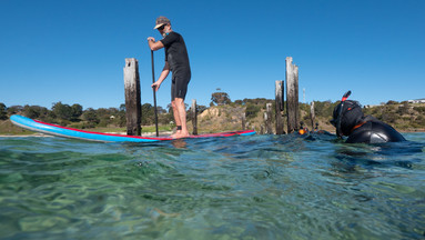 Stand-up Paddle Boarder