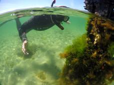 Snorkeller exploring