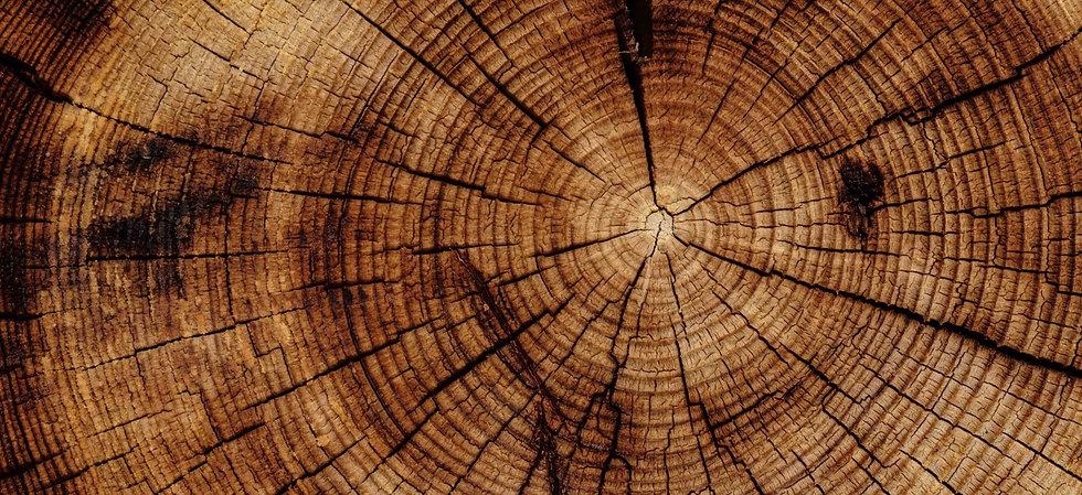 Tree%20rings_edited.jpg