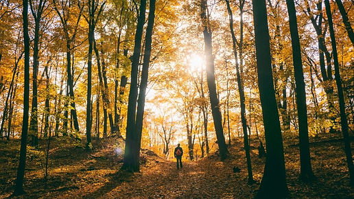 Hiking-in-the-Autumn-by-Unsplash-e154195