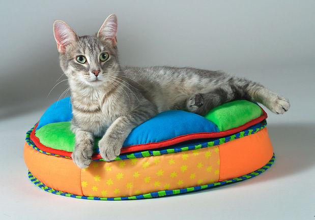 Cat on Bed.jpg