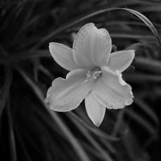 Zonlai 22mm f1 Fujifilm 5.jpg