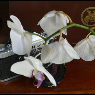 Nikon F2 DE-1 Eye Level flower.jpg