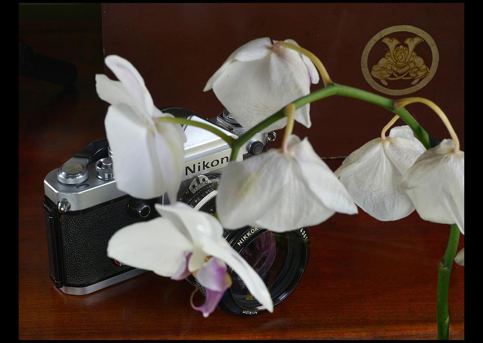 Nikon F2 De 1 Eye Level Flower Jpg
